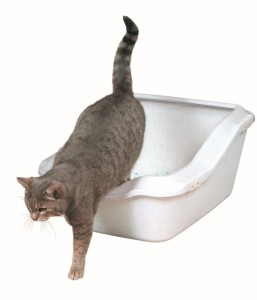 Katze wird unsauber