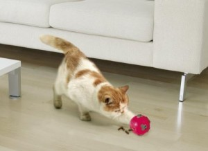 snackball für katzen