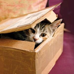 Katze Planung