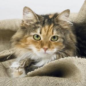 Katze kastrieren