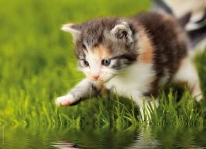 Kitten auf Wiese