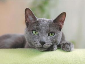 Unsauberkeit bei Katze