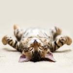 entspanntes Kätchen