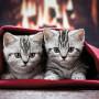 kitten kuscheln