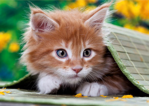 Falls Deine Katze Ein Problem Mit Dem Katzenstreu Hat, Hilft Nur Probieren,  Probieren, Probieren. Hier Habe Ich Für Euch Ein Paar Tipps, Mit Denen Man  Das ...