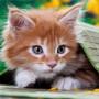 süßes kitten
